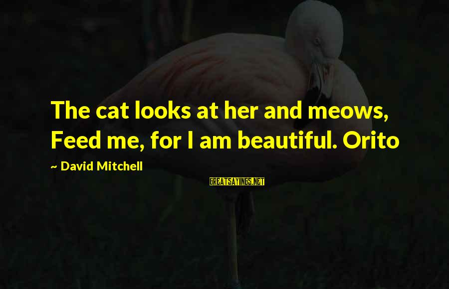 Meows Sayings By David Mitchell: The cat looks at her and meows, Feed me, for I am beautiful. Orito