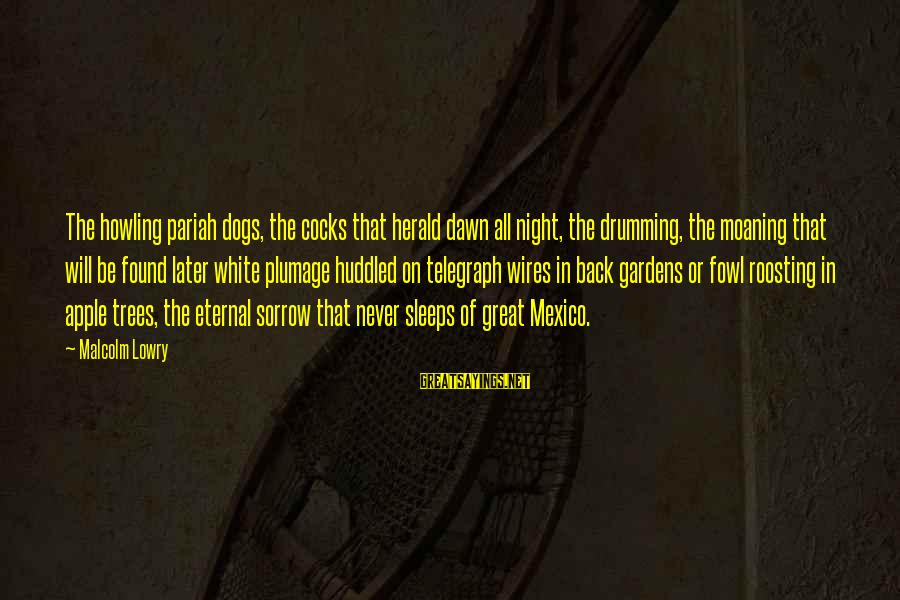 Moaning Sayings By Malcolm Lowry: The howling pariah dogs, the cocks that herald dawn all night, the drumming, the moaning