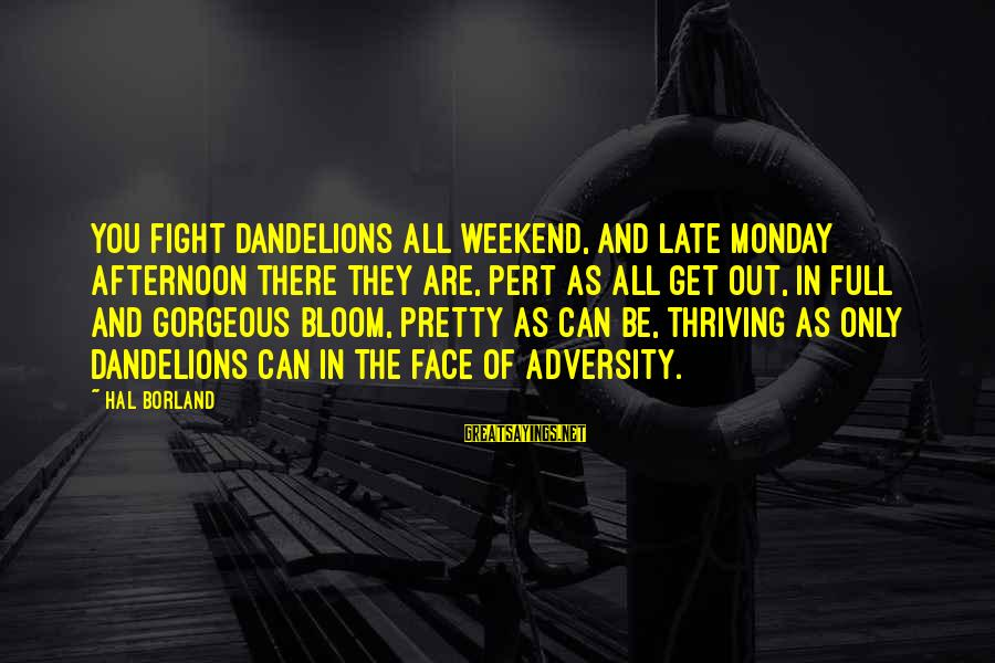 Monday Afternoon Sayings By Hal Borland: You fight dandelions all weekend, and late Monday afternoon there they are, pert as all