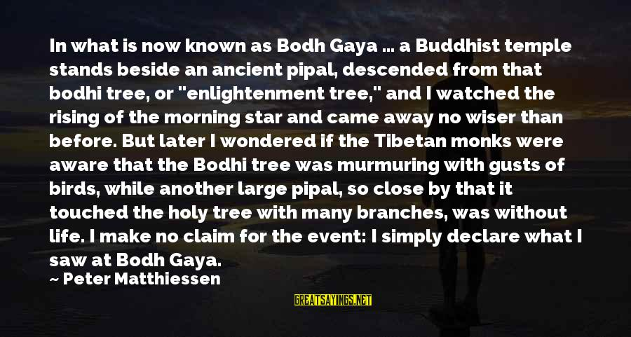 Morning And Nature Sayings By Peter Matthiessen: In what is now known as Bodh Gaya ... a Buddhist temple stands beside an