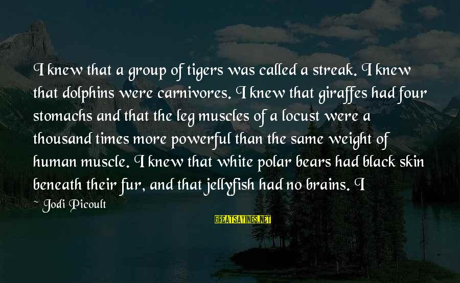 Muscle Sayings By Jodi Picoult: I knew that a group of tigers was called a streak. I knew that dolphins