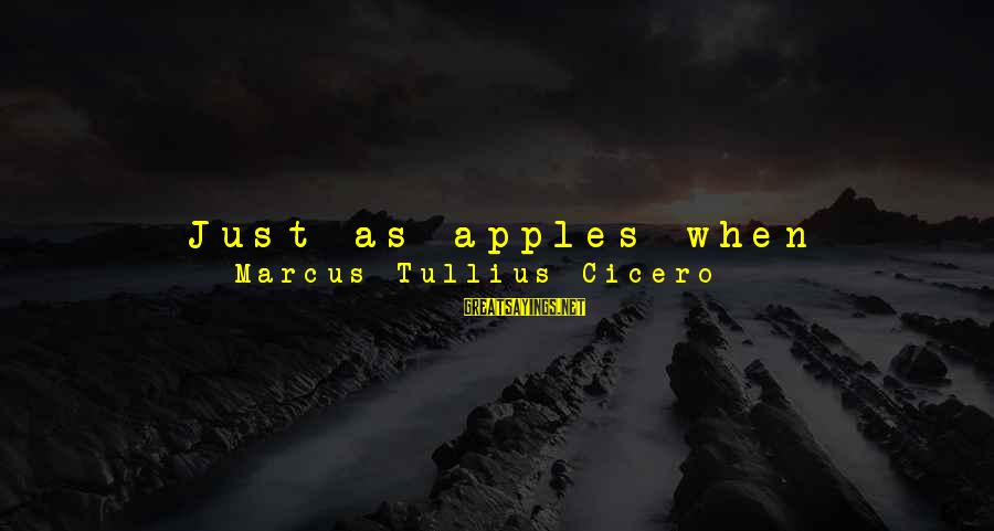 Nearer Sayings By Marcus Tullius Cicero: Just as apples when unripe are torn from trees, but when ripe and mellow drop
