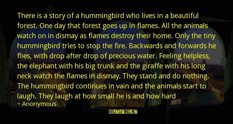 No One Knows My Story Sayings By Anonymous: There is a story of a hummingbird who lives in a beautiful forest. One day