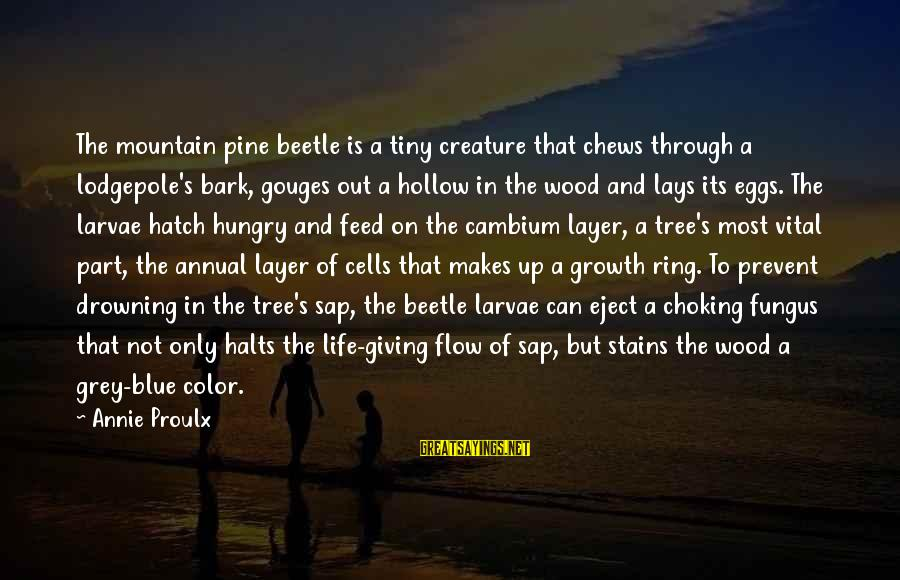 Not Giving Up In Life Sayings By Annie Proulx: The mountain pine beetle is a tiny creature that chews through a lodgepole's bark, gouges