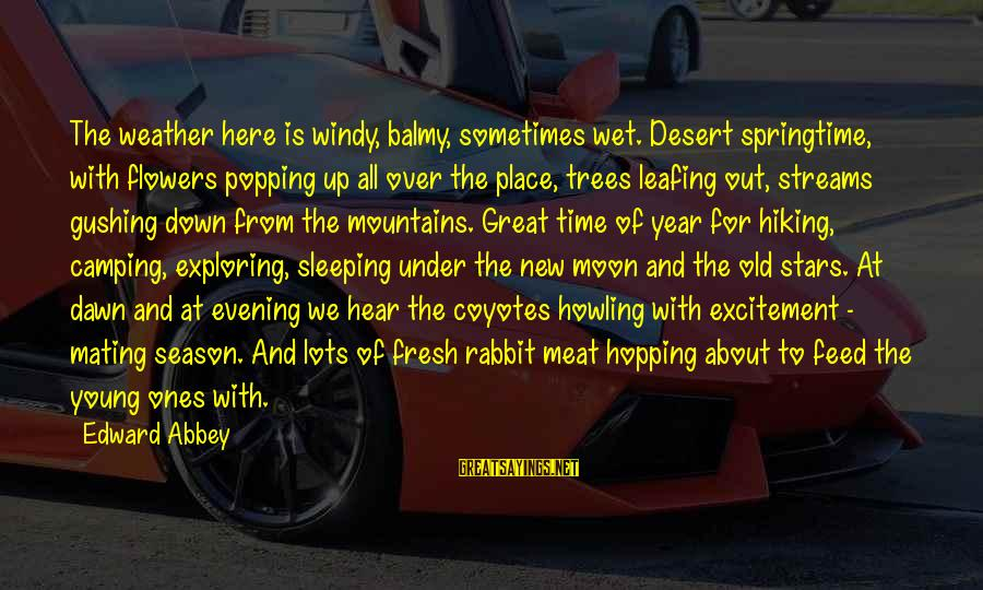 Old Camping Sayings By Edward Abbey: The weather here is windy, balmy, sometimes wet. Desert springtime, with flowers popping up all