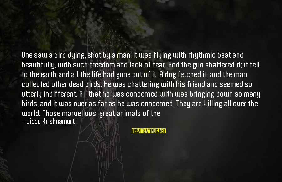 One Shot Life Sayings By Jiddu Krishnamurti: One saw a bird dying, shot by a man. It was flying with rhythmic beat