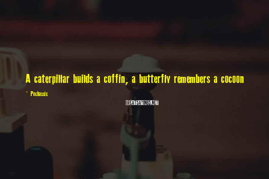 Pochassic Sayings: A caterpillar builds a coffin, a butterfly remembers a cocoon