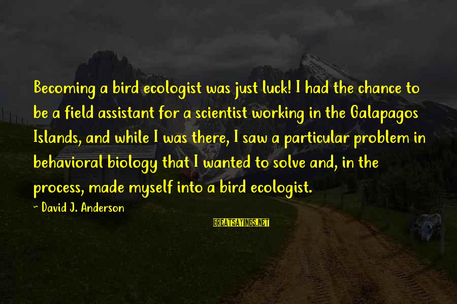 Problem Solve Sayings By David J. Anderson: Becoming a bird ecologist was just luck! I had the chance to be a field
