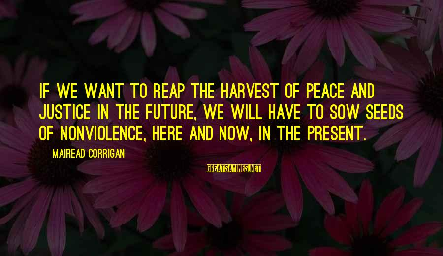 Reap Harvest Sayings By Mairead Corrigan: If we want to reap the harvest of peace and justice in the future, we