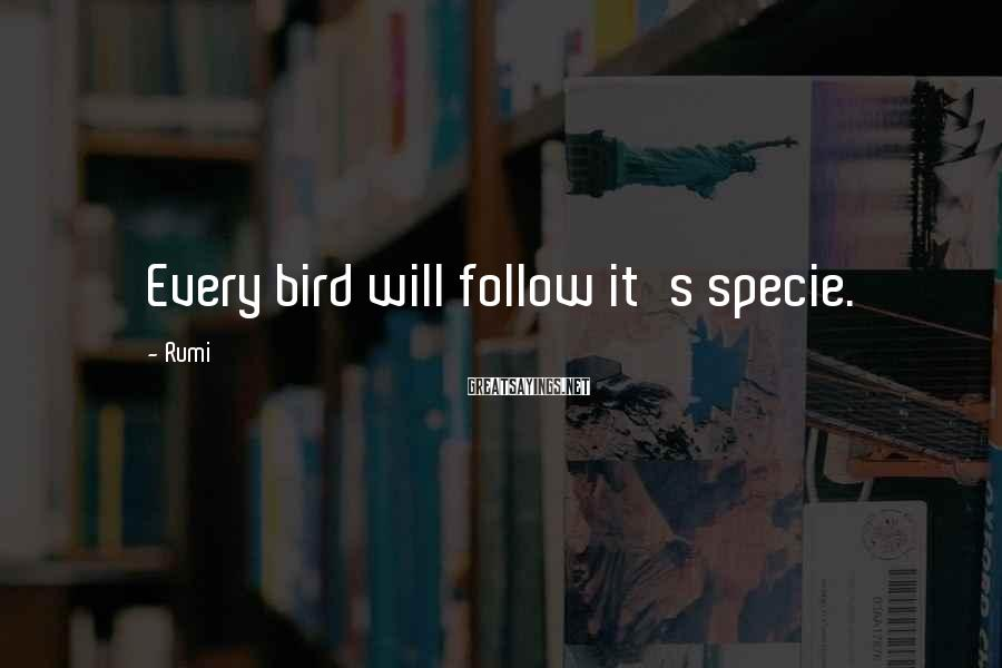 Rumi Sayings: Every bird will follow it's specie.