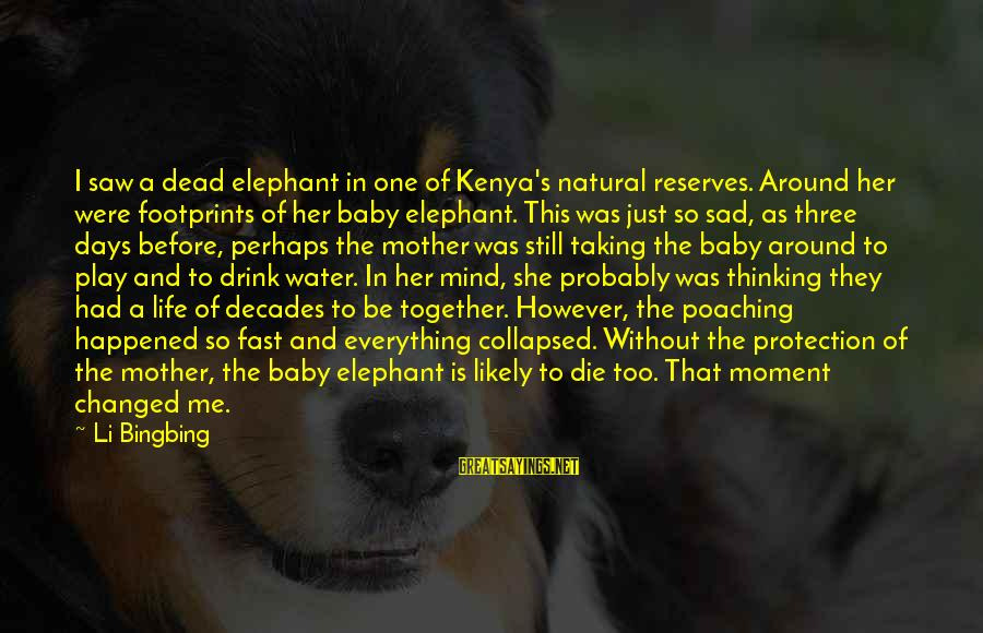 Sad Water Sayings By Li Bingbing: I saw a dead elephant in one of Kenya's natural reserves. Around her were footprints