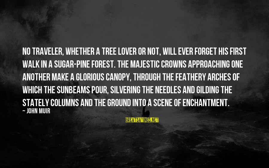 Scene Sayings By John Muir: No traveler, whether a tree lover or not, will ever forget his first walk in