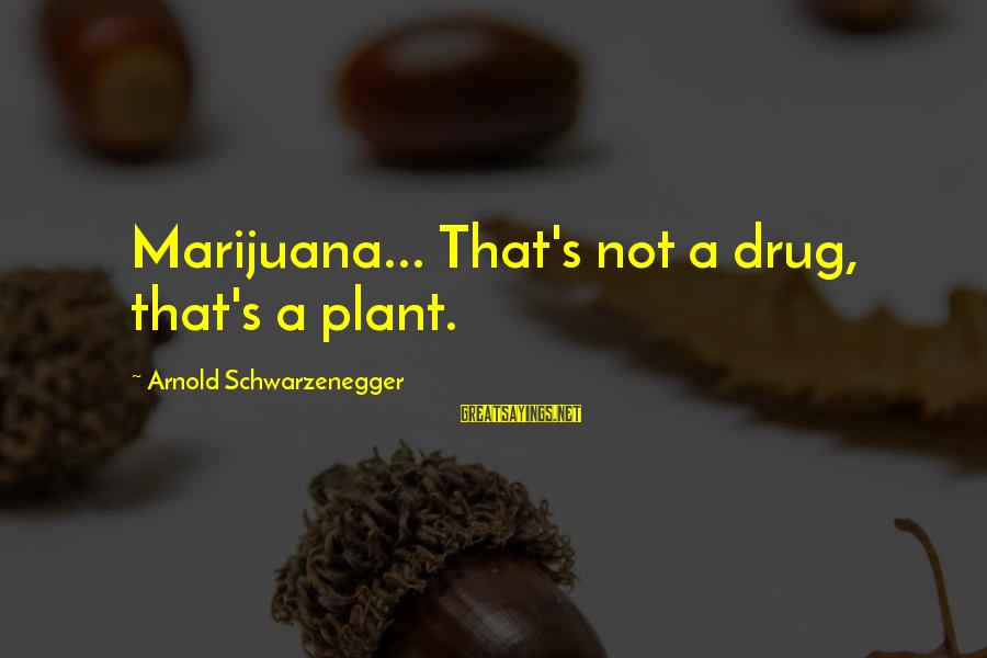 Schwarzenegger's Sayings By Arnold Schwarzenegger: Marijuana... That's not a drug, that's a plant.