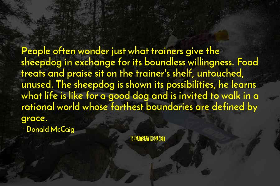 Sheepdog Sayings By Donald McCaig: People often wonder just what trainers give the sheepdog in exchange for its boundless willingness.