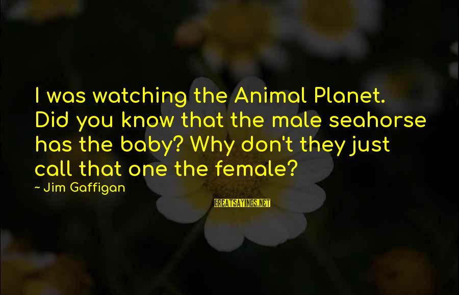 Simpsons Angel Episode Sayings By Jim Gaffigan: I was watching the Animal Planet. Did you know that the male seahorse has the