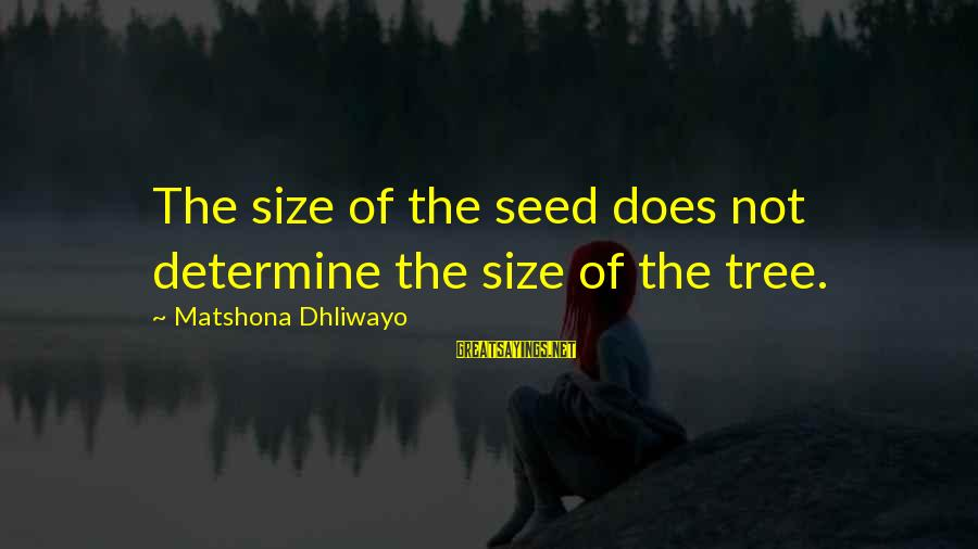 Size Quotes And Sayings By Matshona Dhliwayo: The size of the seed does not determine the size of the tree.
