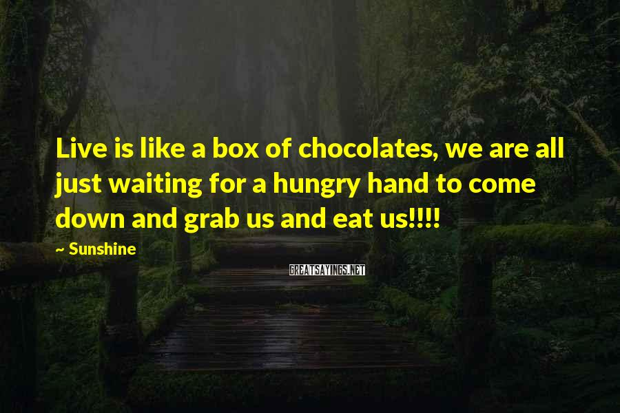 Sunshine Sayings: Live is like a box of chocolates, we are all just waiting for a hungry
