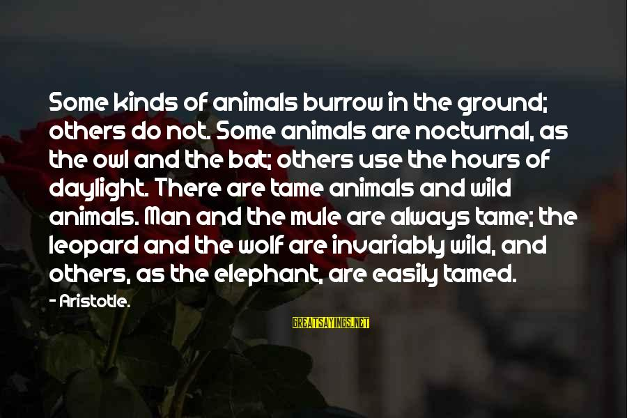 Tame Animals Sayings By Aristotle.: Some kinds of animals burrow in the ground; others do not. Some animals are nocturnal,