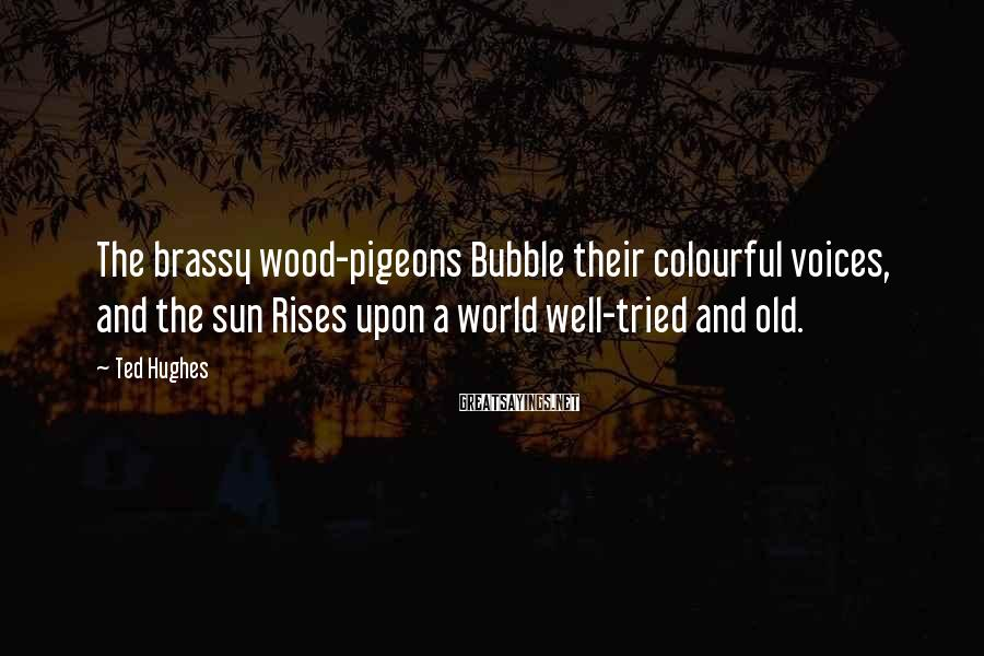 Ted Hughes Sayings: The brassy wood-pigeons Bubble their colourful voices, and the sun Rises upon a world well-tried