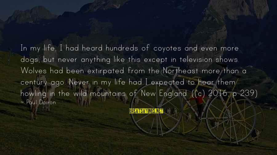 The Northeast Sayings By Paul Doiron: In my life, I had heard hundreds of coyotes and even more dogs, but never