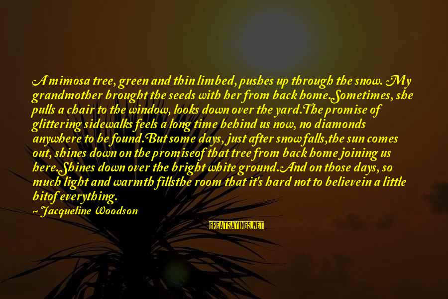The Sun Shines Sayings By Jacqueline Woodson: A mimosa tree, green and thin limbed, pushes up through the snow. My grandmother brought