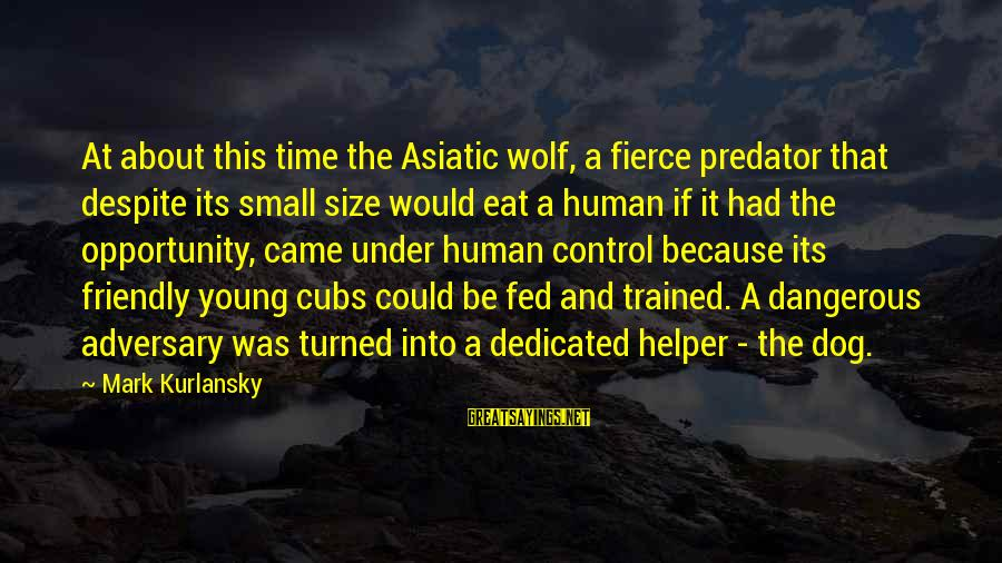 The Young Wolf Sayings By Mark Kurlansky: At about this time the Asiatic wolf, a fierce predator that despite its small size