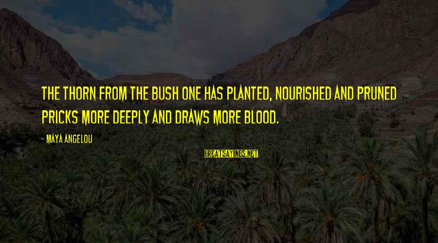 Thorn Sayings By Maya Angelou: The thorn from the bush one has planted, nourished and pruned pricks more deeply and
