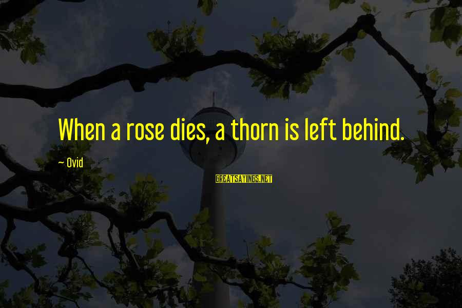 Thorn Sayings By Ovid: When a rose dies, a thorn is left behind.
