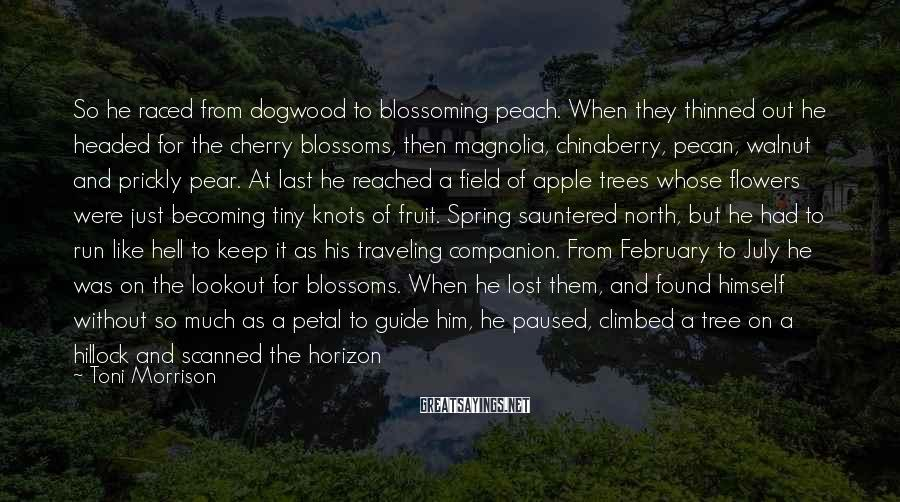 Toni Morrison Sayings: So he raced from dogwood to blossoming peach. When they thinned out he headed for