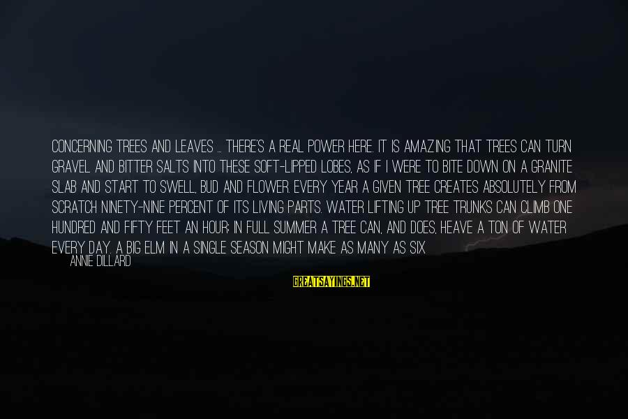 Tree Leaves Sayings By Annie Dillard: Concerning trees and leaves ... there's a real power here. It is amazing that trees