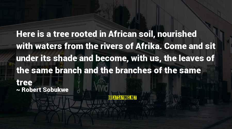 Tree Leaves Sayings By Robert Sobukwe: Here is a tree rooted in African soil, nourished with waters from the rivers of