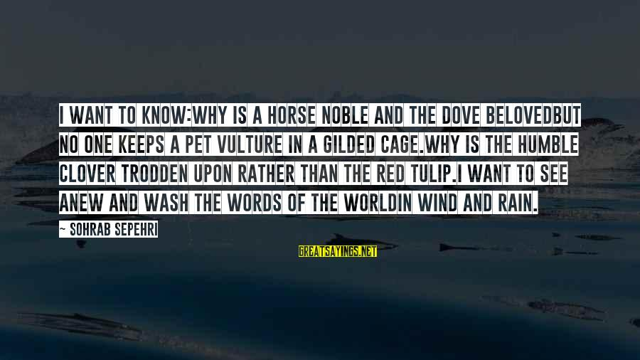 Tulip Sayings By Sohrab Sepehri: I want to know:Why is a horse noble and the dove belovedbut no one keeps