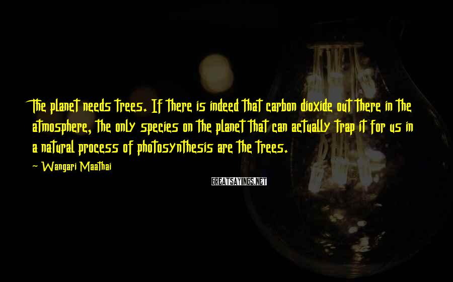Wangari Maathai Sayings: The planet needs trees. If there is indeed that carbon dioxide out there in the
