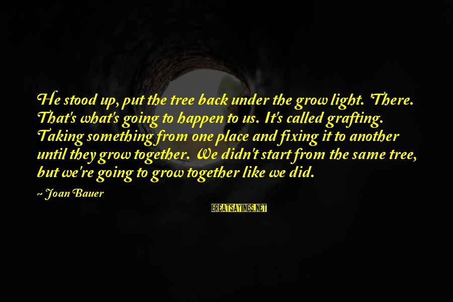We Did It Together Sayings By Joan Bauer: He stood up, put the tree back under the grow light. 'There. That's what's going