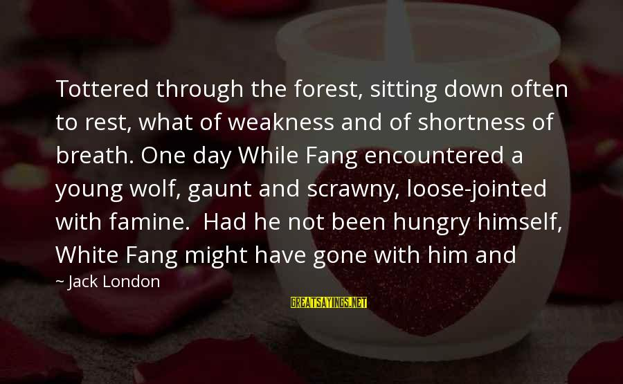 White Wolf Sayings By Jack London: Tottered through the forest, sitting down often to rest, what of weakness and of shortness
