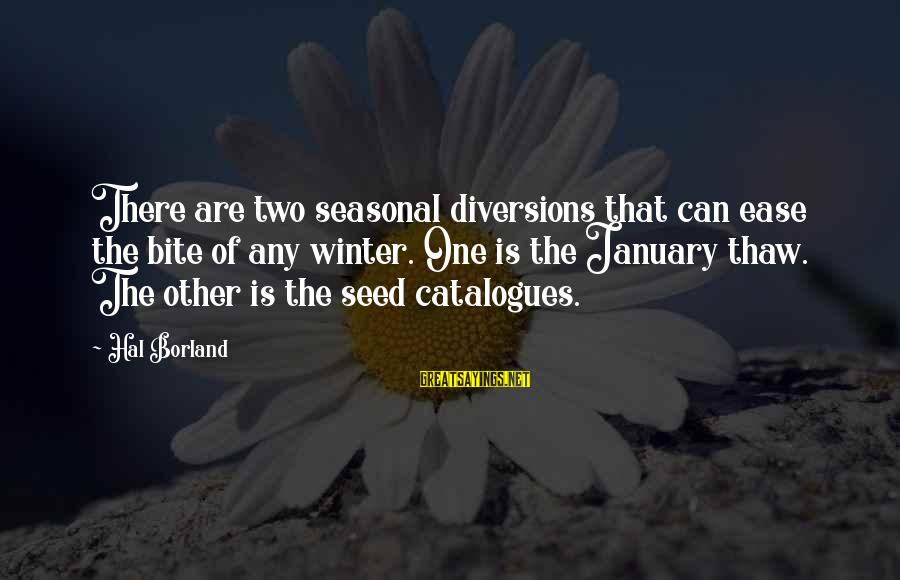 Winter Thaw Sayings By Hal Borland: There are two seasonal diversions that can ease the bite of any winter. One is
