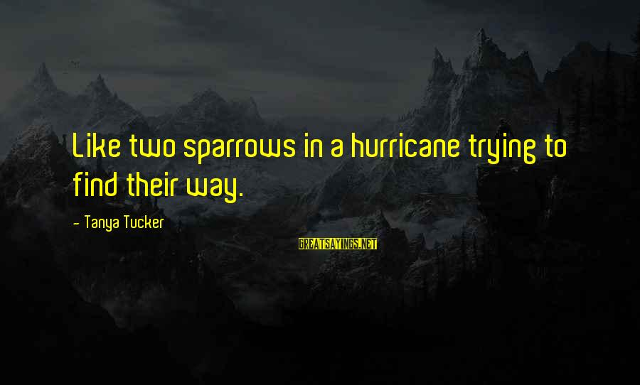 Working Hard On Friday Sayings By Tanya Tucker: Like two sparrows in a hurricane trying to find their way.