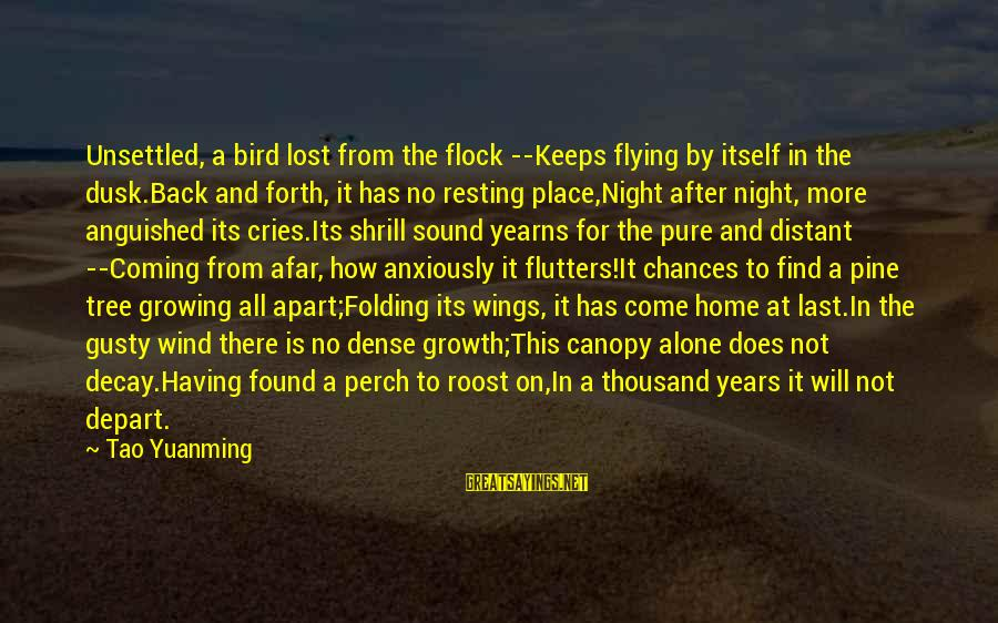 Yearns Sayings By Tao Yuanming: Unsettled, a bird lost from the flock --Keeps flying by itself in the dusk.Back and
