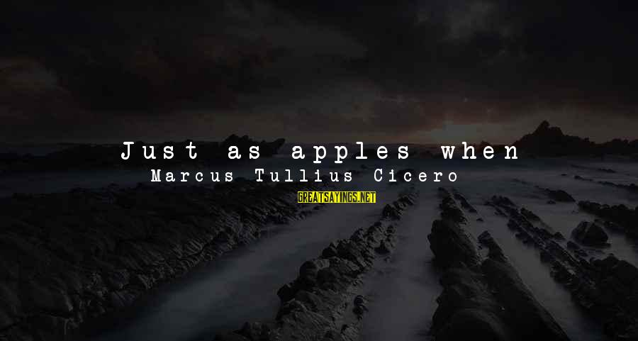 Young But Old Sayings By Marcus Tullius Cicero: Just as apples when unripe are torn from trees, but when ripe and mellow drop