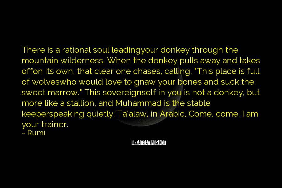 """Rumi Sayings: There Is A Rational Soul Leadingyour Donkey Through The Mountain Wilderness. When The Donkey Pulls Away And Takes Offon Its Own, That Clear One Chases, Calling, """"This Place Is Full Of Wolveswho Would Love To Gnaw Your Bones And Suck The Sweet Marrow."""" This Sovereignself In You Is Not A Donkey, But More Like A Stallion, And Muhammad Is The Stable Keeperspeaking Quietly, Ta'alaw, In Arabic, Come, Come. I Am Your Trainer."""
