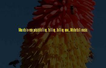 Falling Petals Sayings