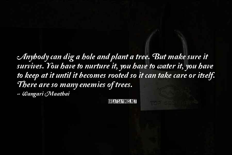 Wangari Maathai Sayings: Anybody Can Dig A Hole And Plant A Tree. But Make Sure It Survives. You Have To Nurture It, You Have To Water It, You Have To Keep At It Until It Becomes Rooted So It Can Take Care Or Itself. There Are So Many Enemies Of Trees.